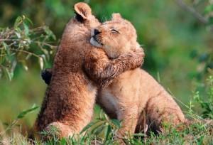 animal-hugs-1